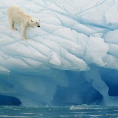 Eisbären erleben