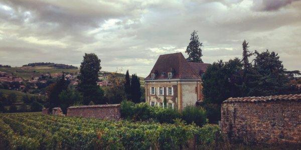 Weingut in Burgund | JN Touristik | Ihr Reisebüro in Strausberg
