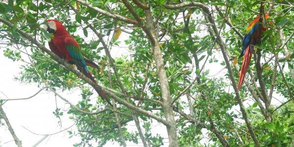Panama  | JN Touristik | Ihr Reisebüro in Strausberg